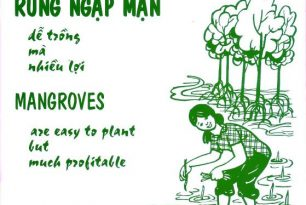 Mangrove plantation is easy but many benefit