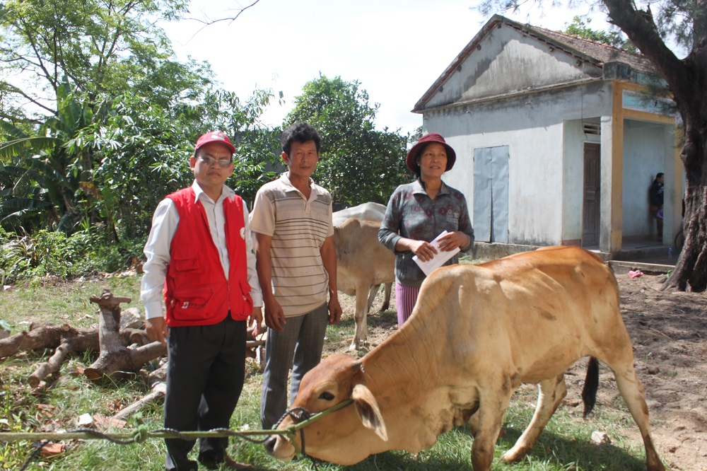 A household in Phuoc Thuan Tuy Phuoc receives a cow from the operation. Photo by VNRC