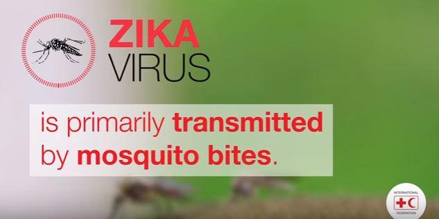 Zika mosquito picture